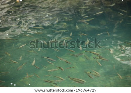 A pool of water filled with lots of small fish. - stock photo