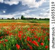 a poppy field and a country house in Latvia - stock photo