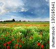 a poppy field and a country view in Latvia - stock photo