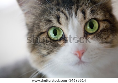A portrait close up of a green eyed cat