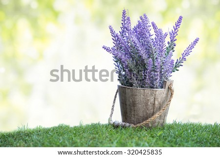 A portrait of a bunch of violet flowers on a wooden pot in green grass. with bokeh background - stock photo