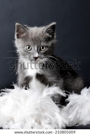 A portrait of a cute kitten sitting in feathers on an isolated background - stock photo