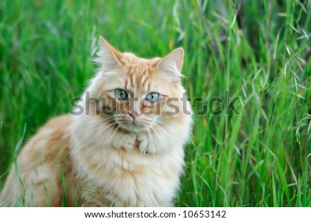 A portrait of domestic cat sitting in fresh spring grass - stock photo