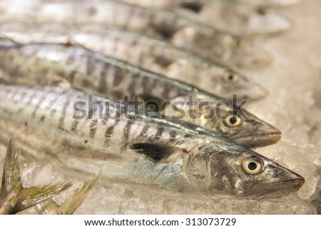 A portrait of Flesh raw Mackerel fishes in the market - stock photo