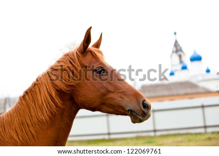 A portrait of red hors in front of white church - stock photo