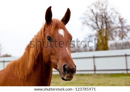 A portrait of red horse - stock photo