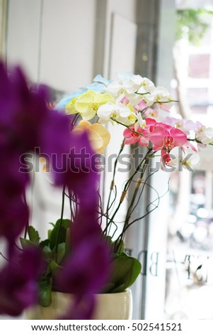 A pot of Phalaenopsis orchids flower - flower design, flower decoration - a special gift or presents for Tet Holidays, with meaning is to bring the lucky and wealth for the owners