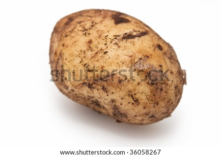 A potato on white background. Studio shot.