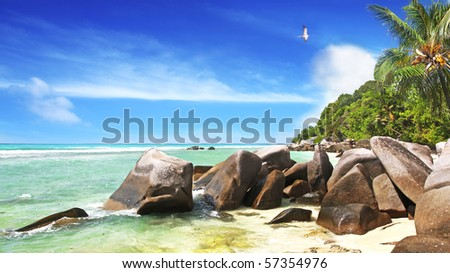 A pr of Sooty Terns the national Bird of the Seychelles  complete this idyllic scene on the Island of La Dique - stock photo