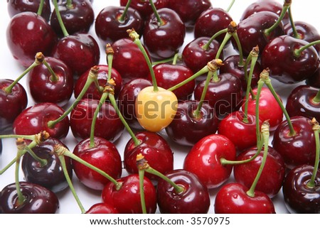 A premature cherry standing out from the crowd - stock photo