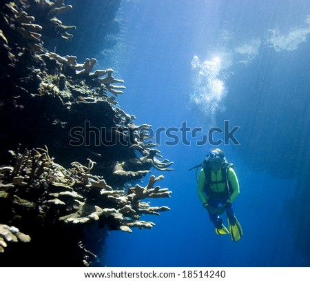a pretty female scuba diver swimming between underwater cliffs and looking at coral. the wall is lit by bright sunbeams, - stock photo