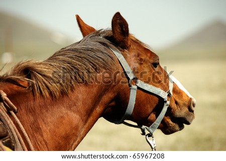 A profile of a brownish red sorrel American quarter horse on a ranch. - stock photo