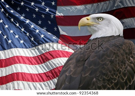 A proud Bald Eagle in front of the American Flag - stock photo