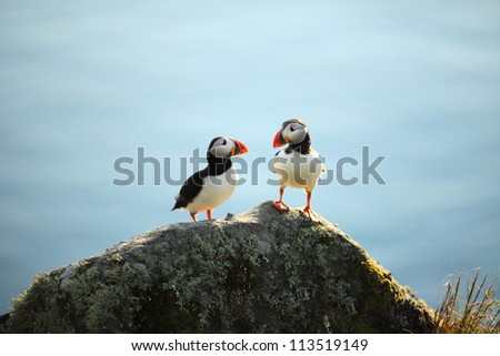 A puffin on a cliff, Norway - stock photo