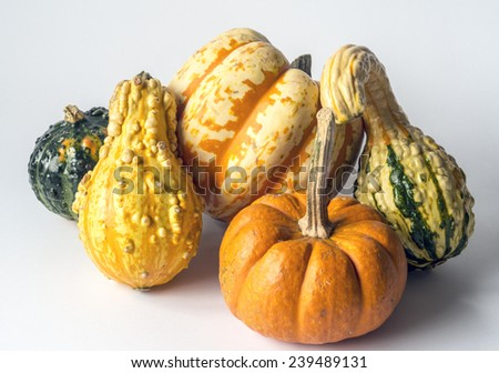 A pumpkin is a cultivar of the squash plant, most commonly of Cucurbita pepo - stock photo