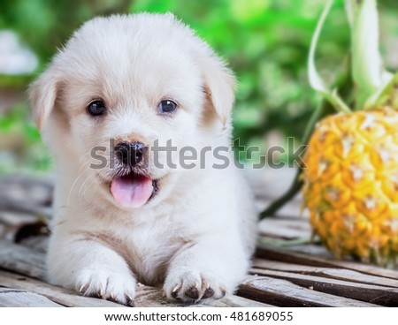 A puppies with blurry pineapples.