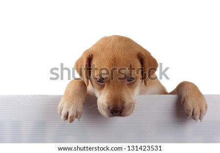 A puppy appears pensive with his paws on a white fence. - stock photo