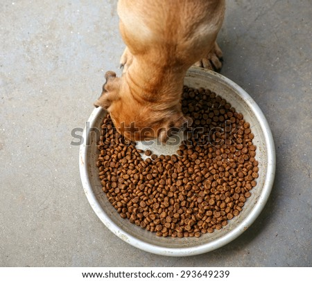 a puppy chowing down on dry dog food kibble in a metal bowl on concrete - stock photo