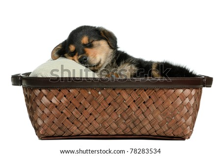 A puppy dog lying in a wicker basket is isolated against a white background. - stock photo