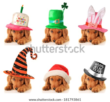 A puppy for every occasion. Birthday, St Patrick's, Easter, Halloween, Christmas and New Year.  - stock photo