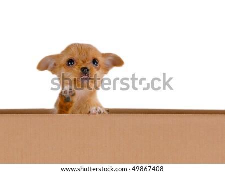 A puppy in a cardboard box - stock photo