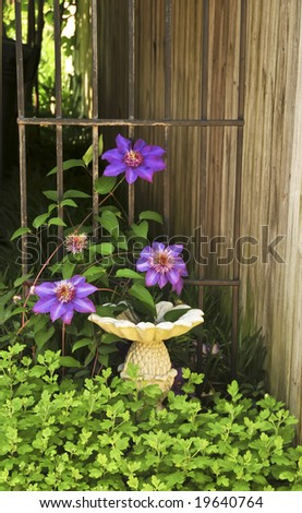 A purple clematis vine wrapping around a pineapple bird feeder. - stock photo