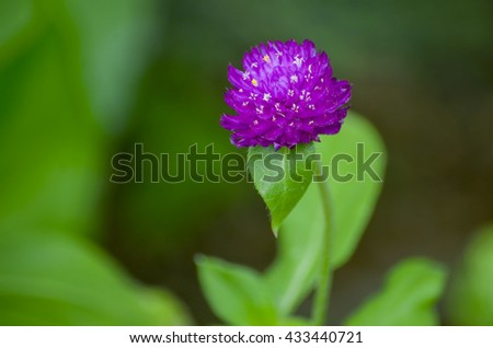 A purple flower in the garden