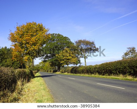 a quiet country road with autumn trees under a blue sky