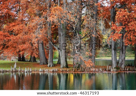 A Quiet Little Pond And Eastern Red Cedar Trees In Autumn Attire, Southwestern Ohio, Juniperus virginiana - stock photo
