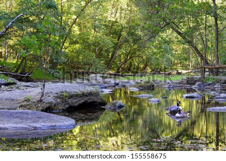 A Quiet mountain stream in the Maryland Appalachian mountains with 2 Canadian Geese - stock photo