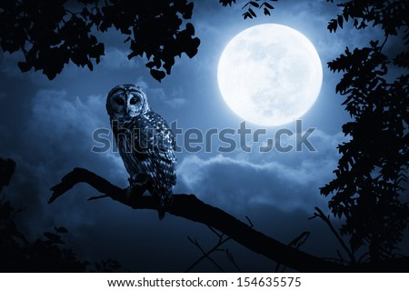 A quiet night, a bright moon rising over the clouds illuminates the darkness, and a Barred Owl sits motionless in the blue moonlight. slight diffuse glow added to enhance scene. All my own components. - stock photo
