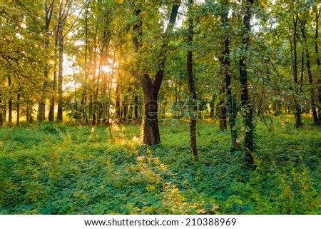 A quiet view of the woods close to the Dnieper river soon at dawn