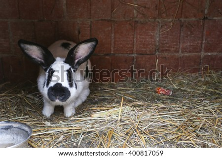 A rabbit in the cage standing on the hay. - stock photo