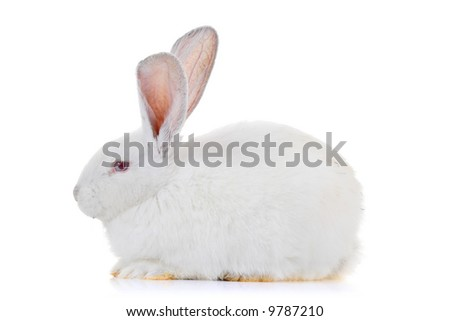 A rabbit isolated against white background - stock photo