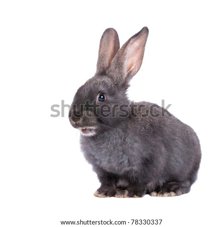 a rabbit,isolated on white - stock photo