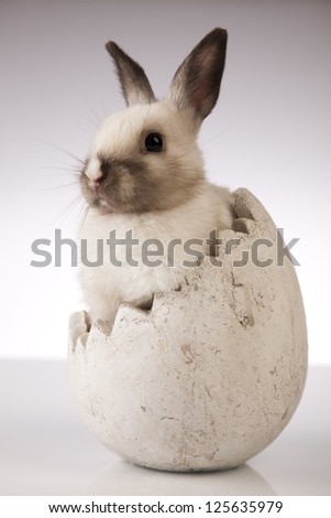 A rabbit isolated white background - stock photo