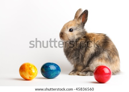 A rabbit with easter eggs isolated on white background - stock photo