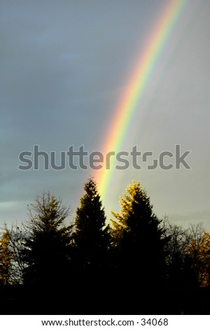 A rainbow over evergreen trees in the Pacific Northwest - stock photo