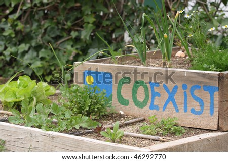 A raised bed vegetable garden - stock photo
