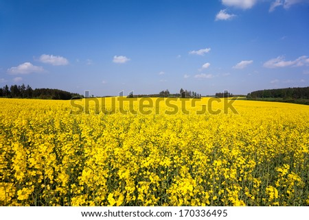 A rapeseed field in May in a Thuringian landscape - stock photo
