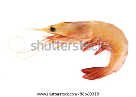 A raw banana prawn isolated on a white background.