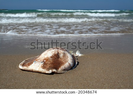 A ray fish on the beach
