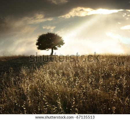 a ray of light breaks through the dramatic sky at sunset and hit an oak tree solitary - stock photo