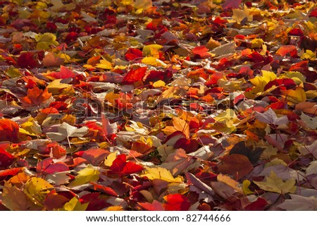 A ray of sunlight on the fallen autumn leaves. - stock photo