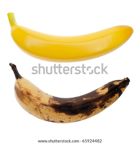 A real banana and an artificial banana. The real fruit is beginning to spoil and turn black, whereas the plastic banana is perfectly shaped and bright yellow. Isolated on a pure white background. - stock photo