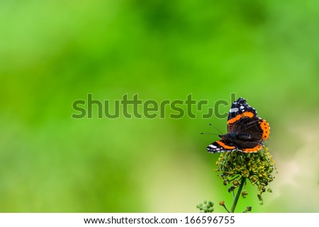 A Red Admiral butterfly with blurred foliage for copy space - stock photo