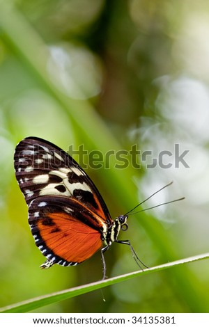 A red and black colored butterfly resting on a green leave