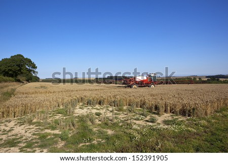 a red and white crop sprayer turning in a field of golden wheat in the yorkshire wolds england under a blue sky in late summer - stock photo