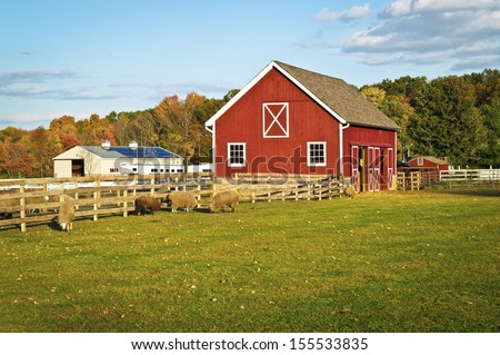 A red barn and farm animals in this scenic Autumn view in Central New Jersey. - stock photo