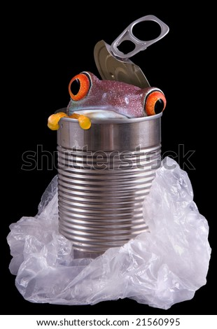 A red-eyed tree frog is peeking out of a discarded metal can surrounded by a plastic bag. - stock photo